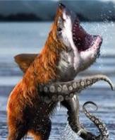 bear shark octopus