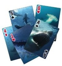 Shark Playing Cards with 3-D Lenticular images