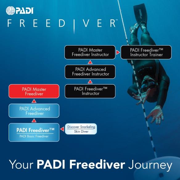 padi_freediver_flowchart