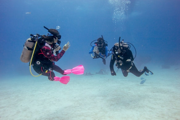padi dive training