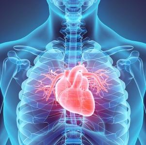3D illustration of Heart, medical concept.